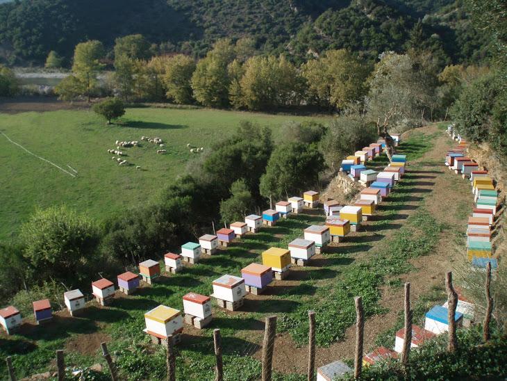 Εγκατάσταση μελισσοκομείου
